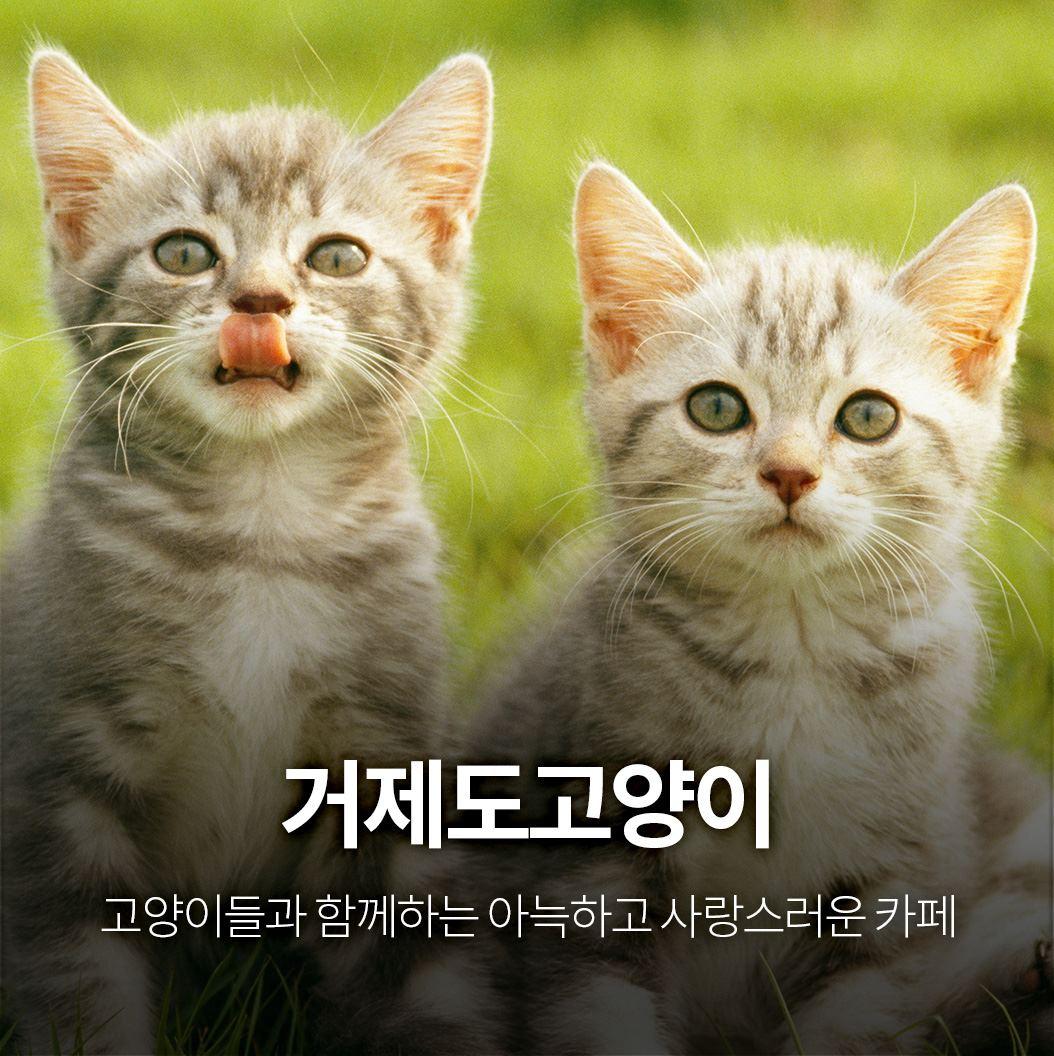 거제도고양이